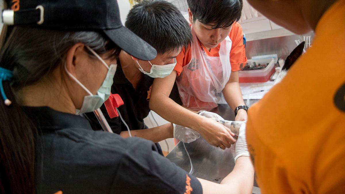 Building Capacity to Tackle the Dog Meat Trade in Vietnam: Providing Veterinary Training to Government Veterinarians