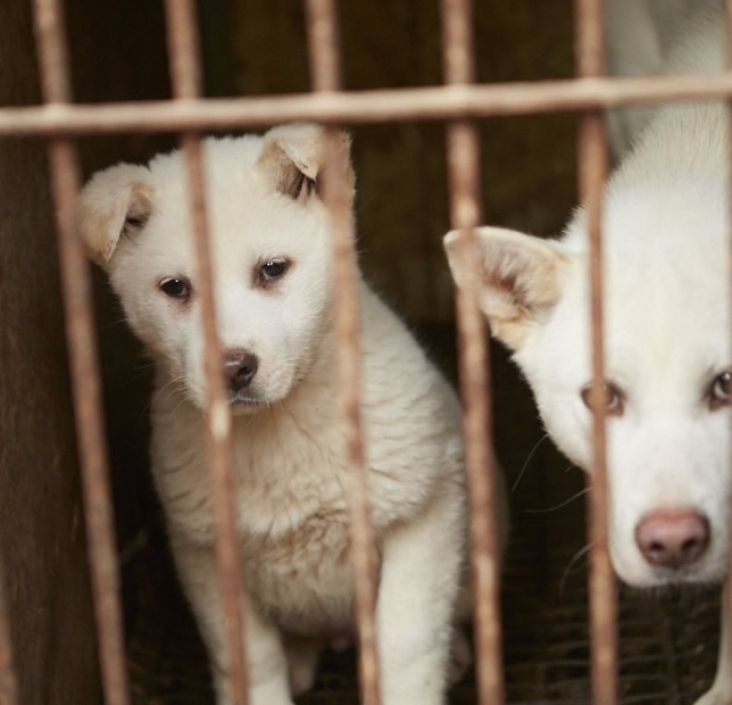 Urgent call for Action: Please sign this letter encouraging British MPs to take action against the dog meat trade.