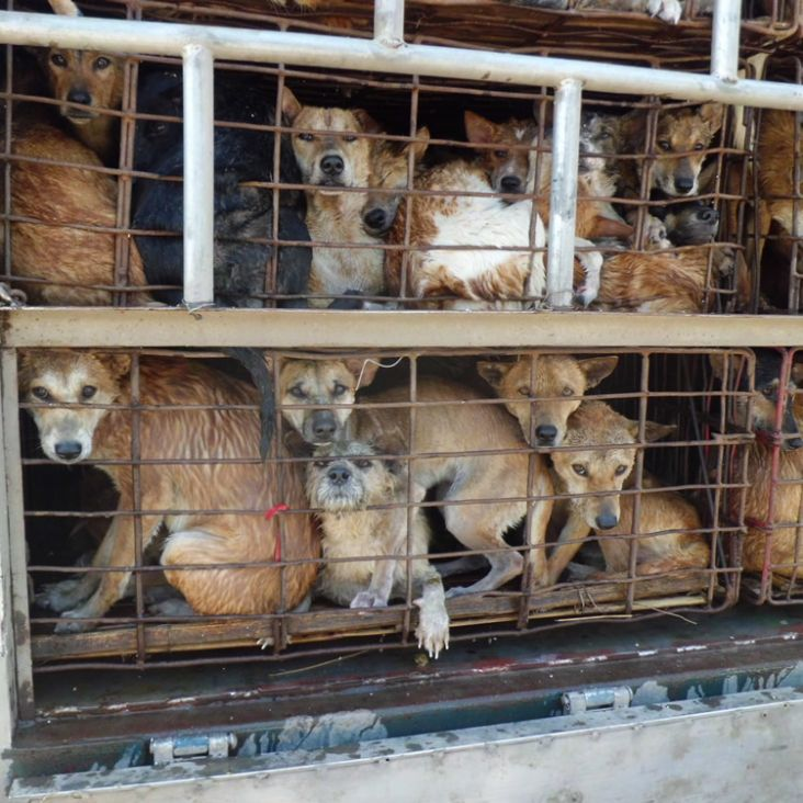 Take URGENT action to stop the brutal slaughter of dogs for their meat!